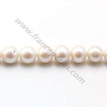 Perles d'eau Douce blanc rond 12-13mm  AA X 40cm