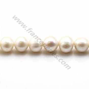 Perles d'eau Douce blanc rond 12-14mm  AA X 40cm