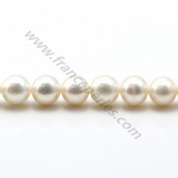 Perles d'eau Douce Blanc rond  10-11mm  AAA X 40cm