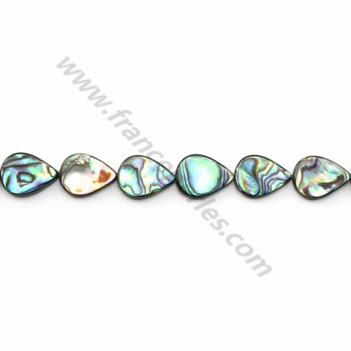 Abalone shell flat drop 12x16mm x 40cm  (25pcs)