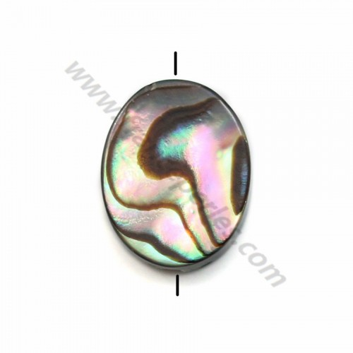 Abalone shell oval 8*10mm X 6 pcs