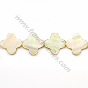 Gold shell clover 18mm (22 pcs)