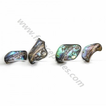 Abalone mother-of-pearl of various shapes and sizes x 39cm